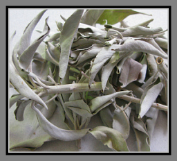 White sage - wands and loose leaf